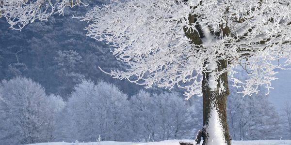baard in de winter